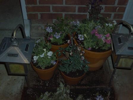 My place holder pots