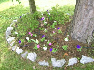 More petunias under the dogwood tree